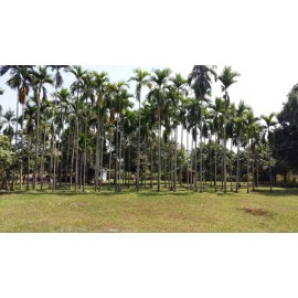 Good River Land for Sale